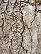 Wood Texture Of Bark Tree.Abstract stock photo