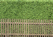 Wooden Picket Fence In Front Of Green Hedge stock photo