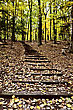 Hiking Wooden Stairs In Forest Sturgeon Bay Wisconsin Potawatomi State Park stock photo