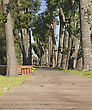 Wooden Walkway Between Trees In The Park