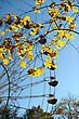 Yellow Autumn Maple Leaves In The Park. stock photo