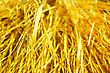 Yellow Dry Grass Texture. Yellow Dry Grass Background At Sun Light stock photography