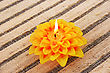 Wax Yellow Flower Candle Isolated On Mat Background. stock photo