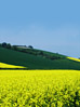 Landscapes Yellow Flower Fields stock image
