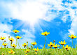 Yellow Meadow Under Blue Sky With Clouds stock image