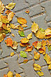 Yellow, Red, Green Leaves On Gray Tile Sidewalk stock photo