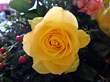Yellow Rose in Flower Bouquet stock image