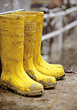 Yellow Rubber Boots stock photo