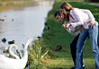 Young Couple Feeding Swans stock photography