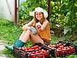Glasshouse Young Gardener Showing Proudly Her Tomato Harvest stock image