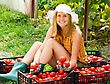 Young Gardener Sorting The Beautiful Harvested Tomatoes stock photography