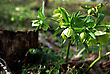 Young Plant In Deep Forest Shadow Lit By Sun Beam stock photography