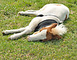 Young Sleeping Pony On A Green Grass stock photo