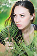 Young Thoughtful Brunette Posing Near The Pine Tree stock photography